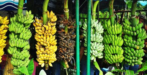 Thai-Banana-4