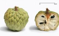 Нойна — сахарное яблоко (Sugar Apple, น้อยหน่า)