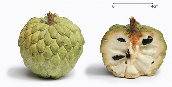 noina-sugar apple (1)