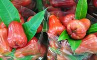 Розовое Яблоко (Чомпу, ชมพู่)
