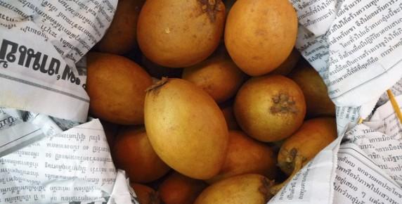 sapodilla-lamut (2)