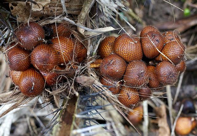 http://www.tasteofthai.ru/wp-content/uploads/2013/01/snakefruit-salak-5.jpg