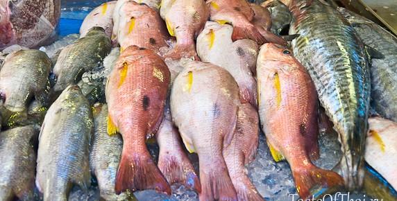choosing-fish-1-6