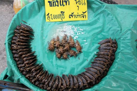 Про вкусных тайских водяных жуков