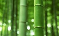 Съедобный Бамбук (Но Маи, หน่อไม้)