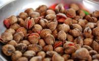 Выбираем и чистим двустворчатых моллюсков